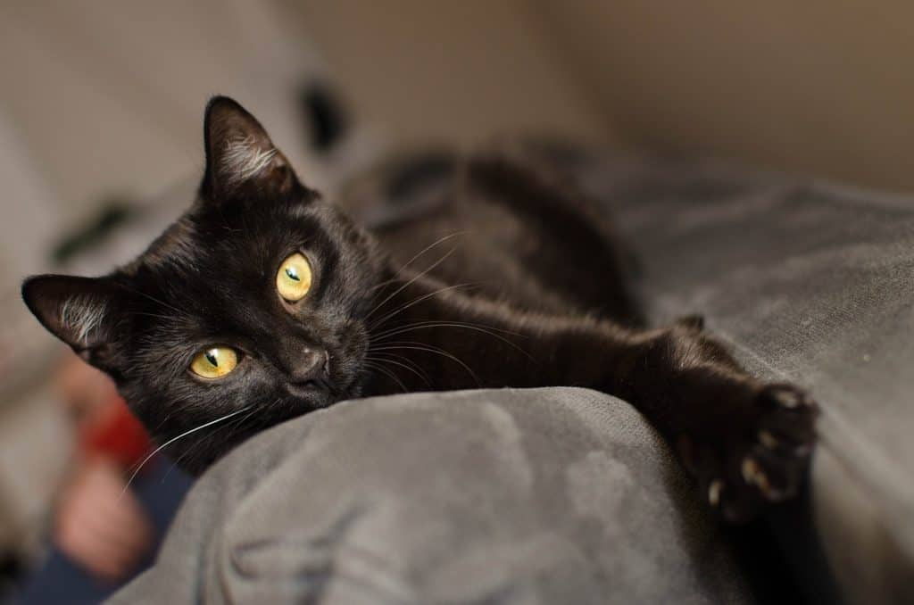 tkanina obiciowa dla psa i kota musi być odporna na zadrapania